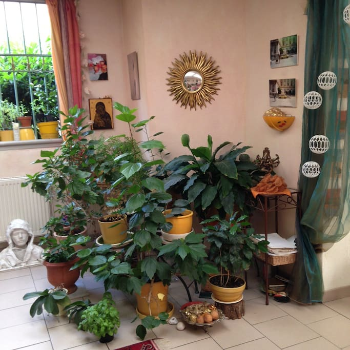 The plants in the salon