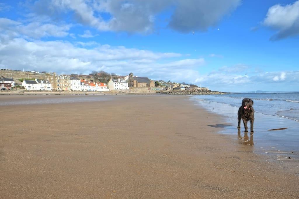 Dog Friendly Accommodation St Andrews Beach