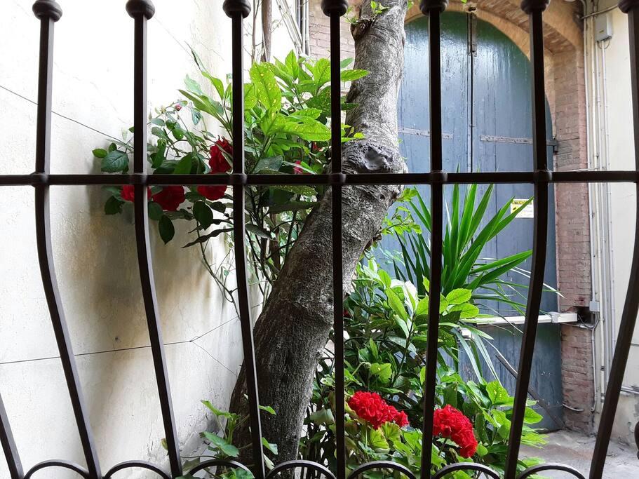 La grata alla finestra in ferro battuto , vista dalla cucina .