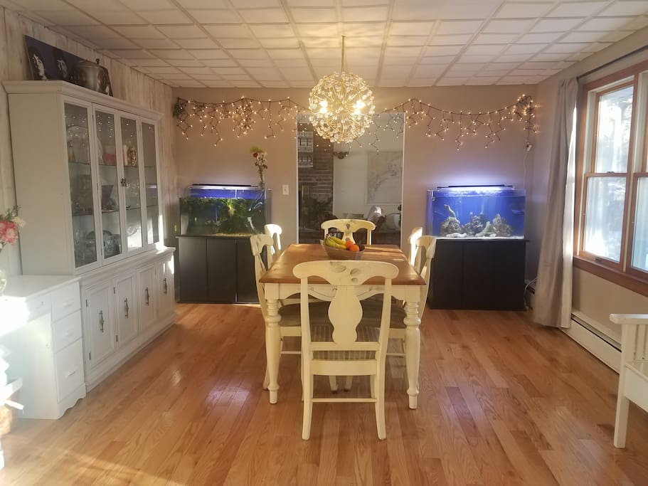 Dining room with fresh and salt water aquariums.