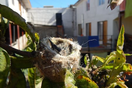 Habitaciòn Papaya, Casa Raices - Flat