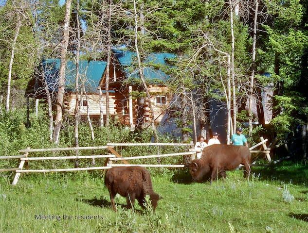 Both Log Cabins-Wildlife Immersion - Townsend - Houten huisje