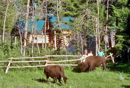 Both Log Cabins-Wildlife Immersion - Townsend - Cabaña