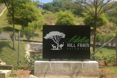 Adelia Hill Farm