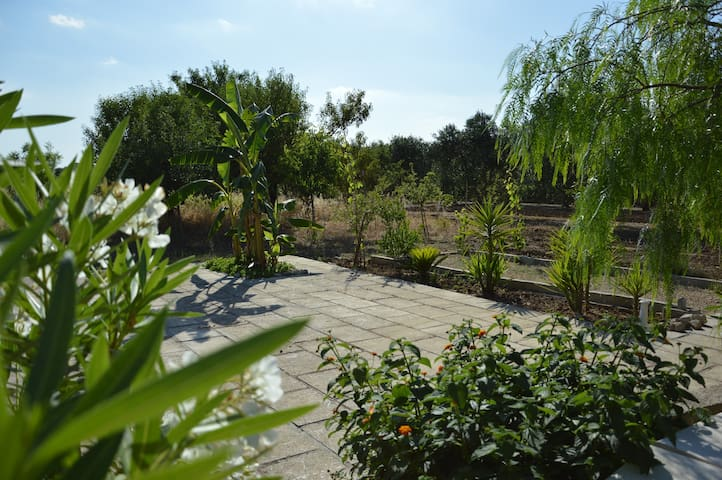 The land the house is situated on, with a variety of fruit trees.