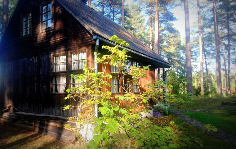 Cozy Cabin surrounded by Pine Trees