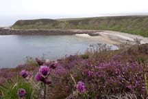 Scotland's Haven is a short walk away and the perfect place to spot seals and have a wild swim.