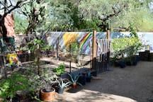 Feel free to harvest from the vegetable garden and lemon tree.