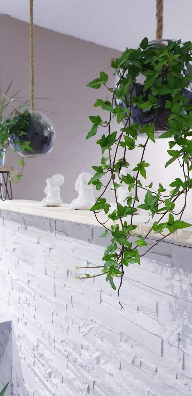 Studio Cosy, moderne et nature