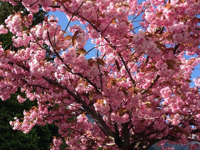 Le printemps à Chamonix....