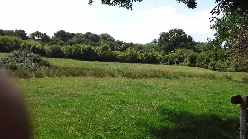 The Abbey Meadows - Wild Camp Lower Pasture