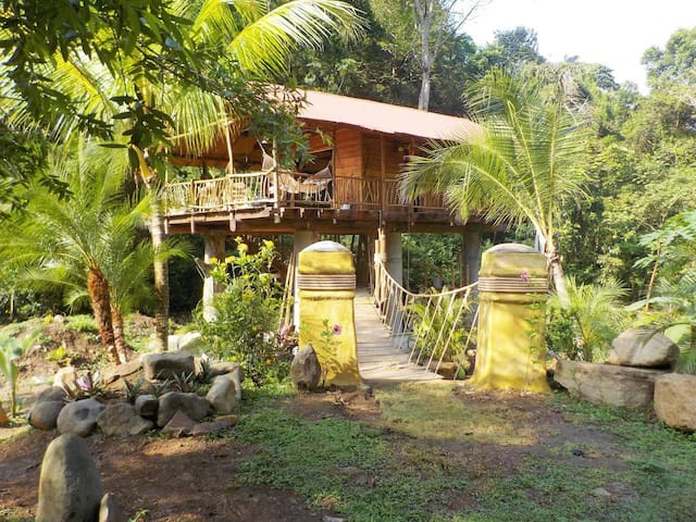 Lost in the Jungle, a Treehouse Adventure