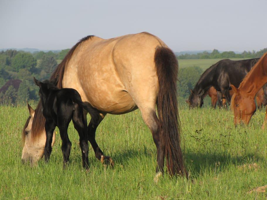 Uitzicht over de paardenweides vanuit de tent of caravan.