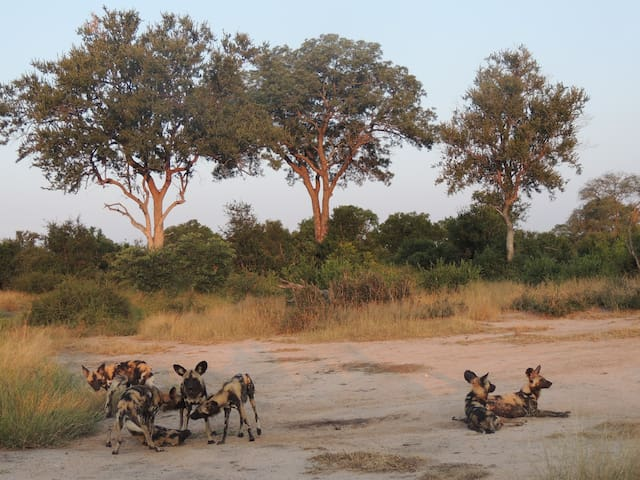 Distinctly Africa - Manyeleti - Greater Kruger