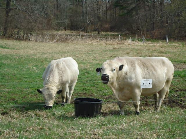 breakfast milk/eggs come from local, organic farm