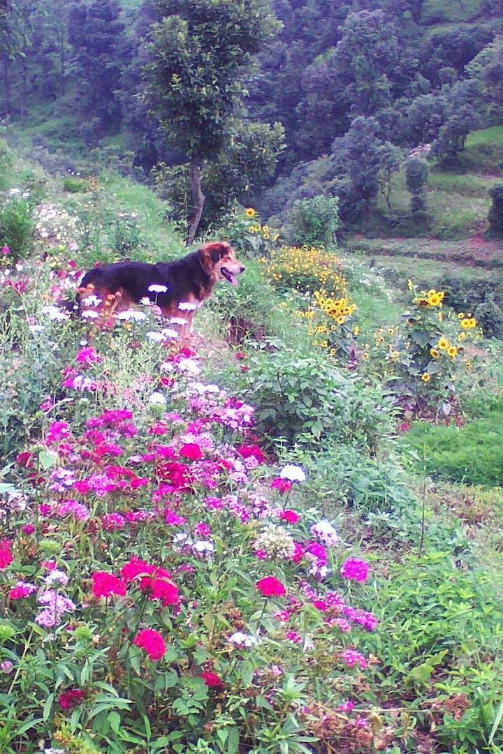 My dog sheru leads our walk