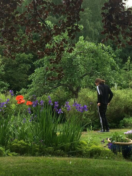 A wonderful garden!
