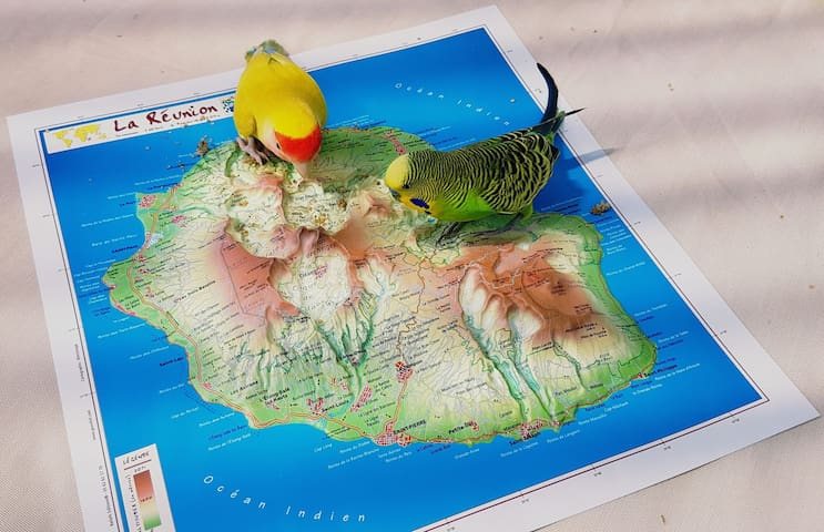 Citron et Kiwi