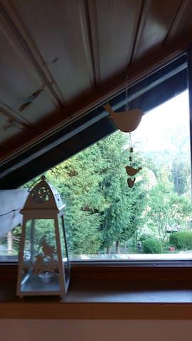 look through the window