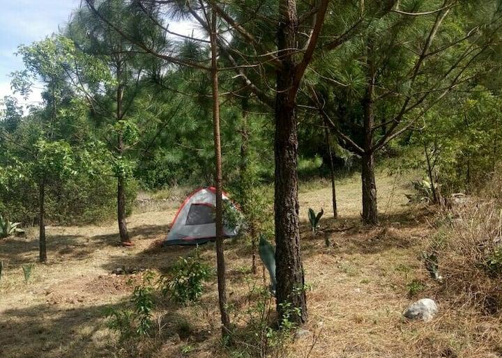 """Campamento familiar """"Bosque de la mesita"""""""