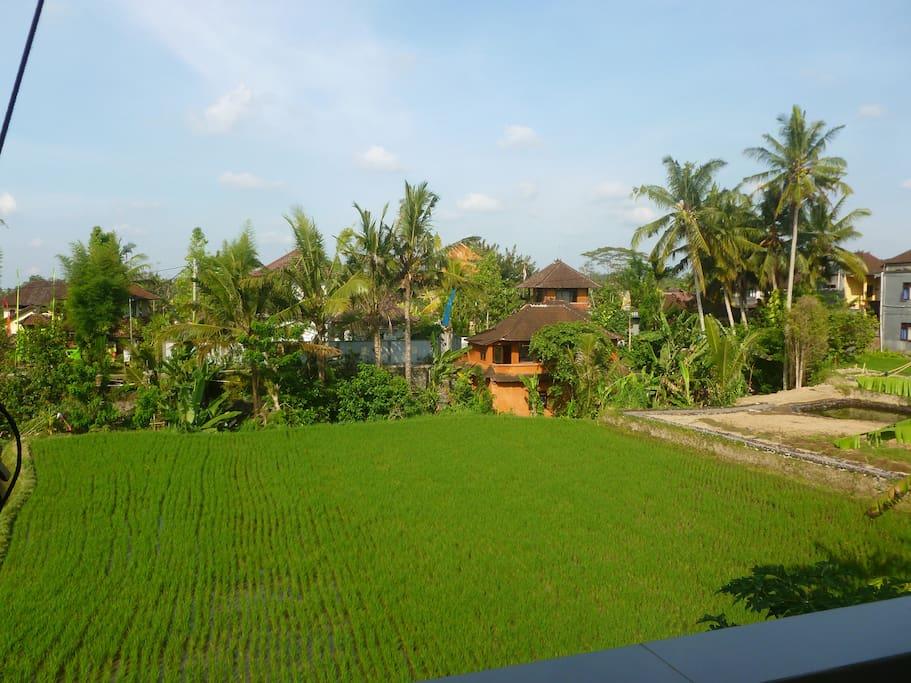 terraces view