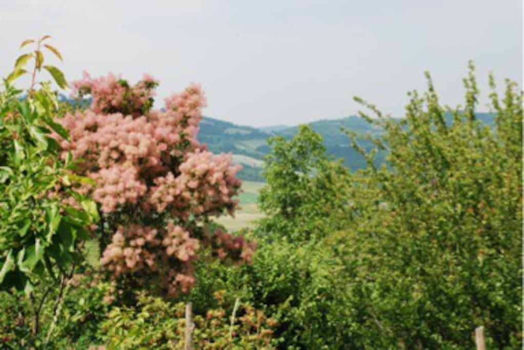Il grandissimo giardino