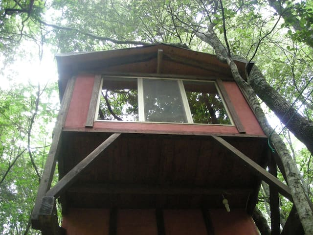 Tree house with tent place