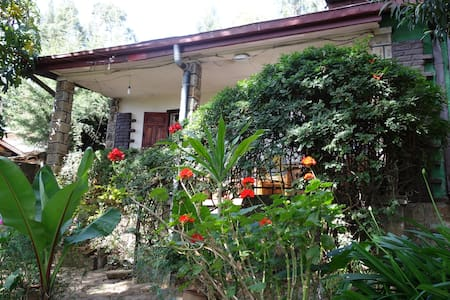 Enchanted house in a magical garden - Addis Ababa