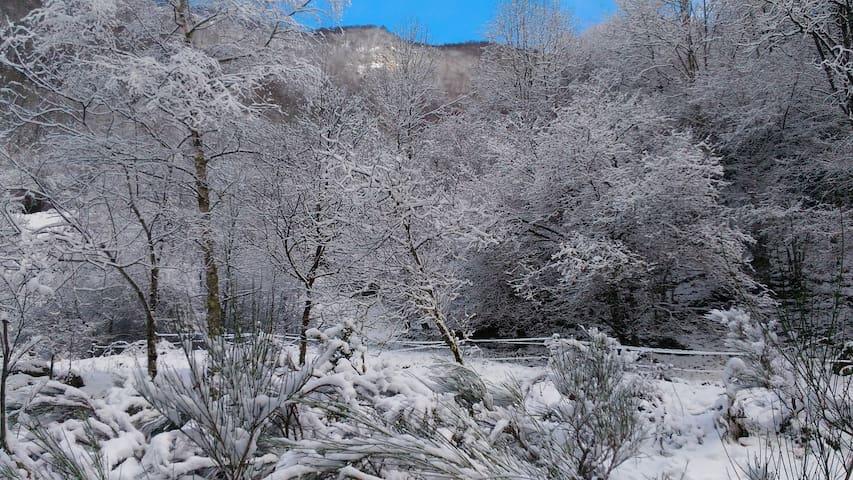 Au bord du ruisseau des Cougnets