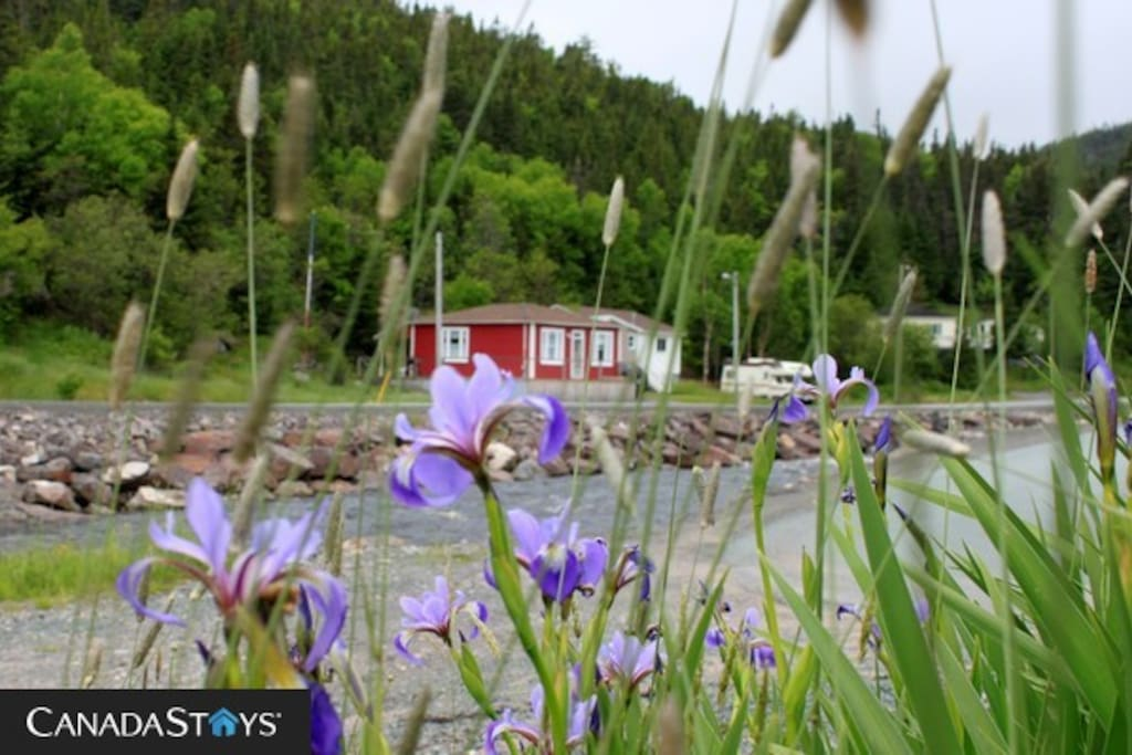 On the river 10 mins from trinity cabins for rent in for Cabins in newfoundland
