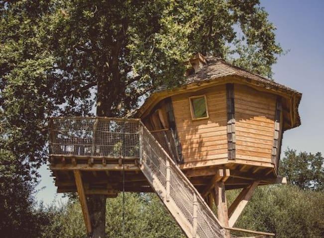 La Chouette Cabane - Lapone - Pommerieux - Cabana en un arbre