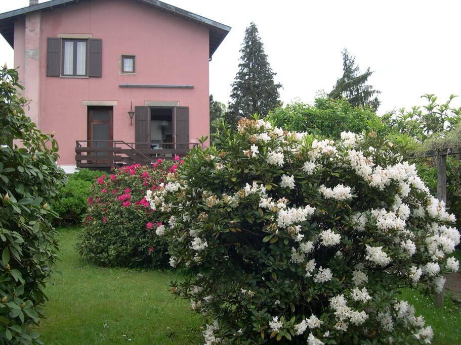 Giardino  e facciata posteriore di Villa Maria Cristina - Rododentri in fiore - Primavera 2015