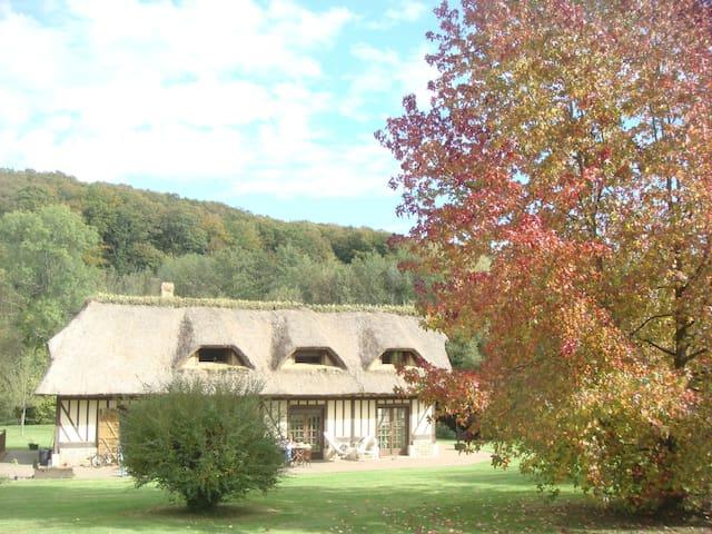 Les couleurs de l'érable en automne