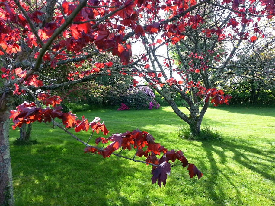Garden view May 2015