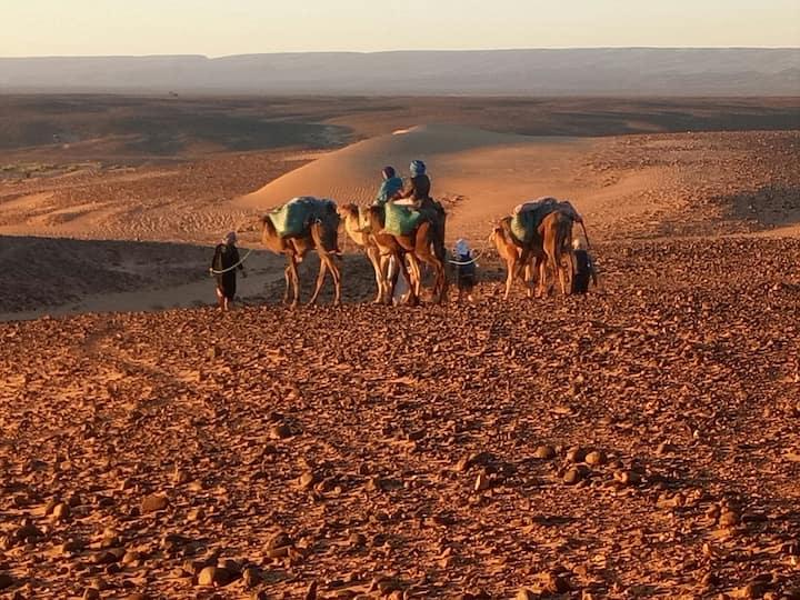 Bivouac sahara peace