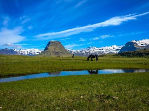 Berg 2 Horse farm life