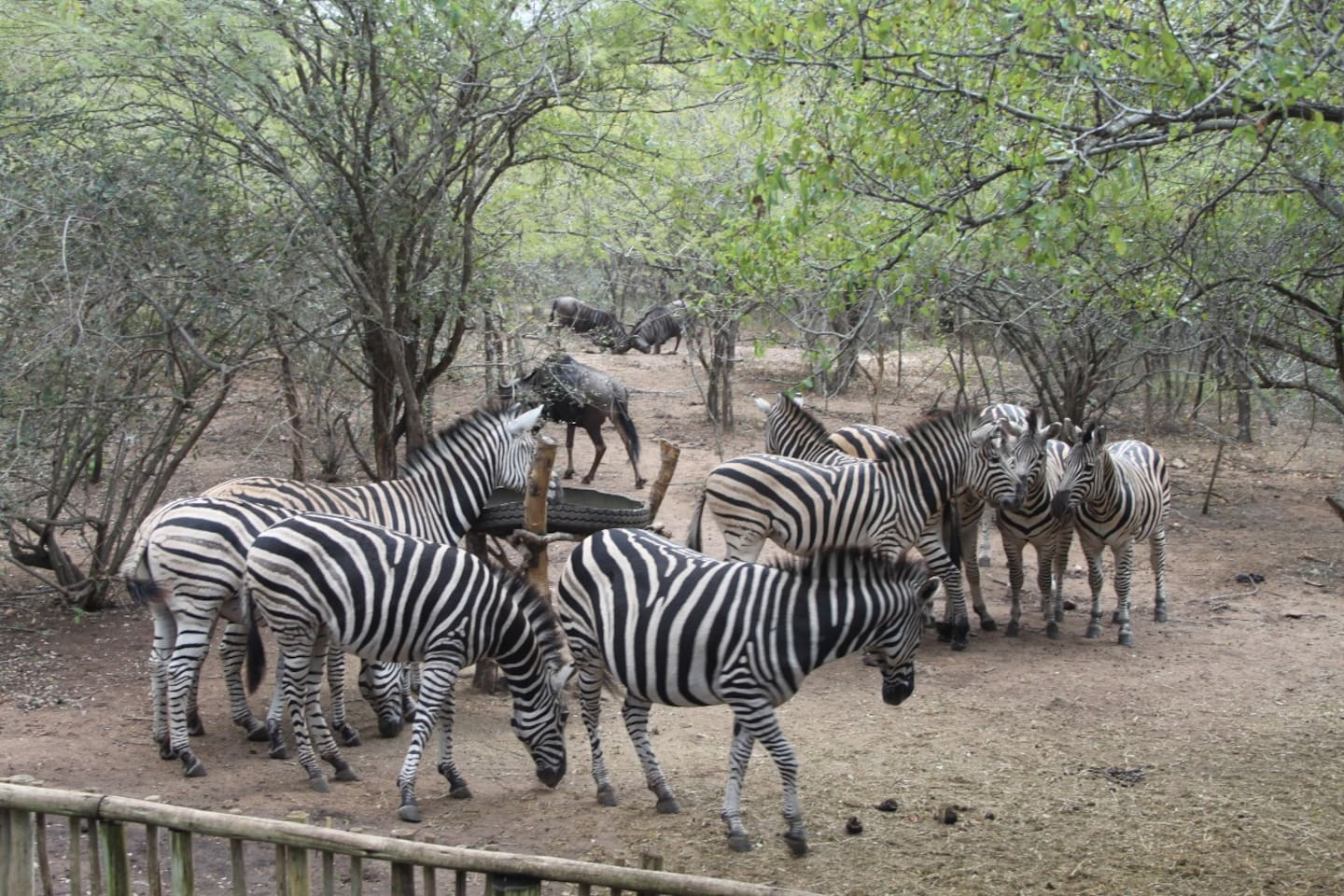 Zinkwazibush is ideally situated and is frequently visited by animals. Guests can sit on the Deck and enjoy the animals on your doorstep.