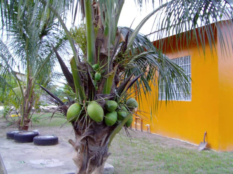 Stop by any of the many coconut trees in Los Lagos Gardens and have a cool sip of coconut water whenever you feel like it