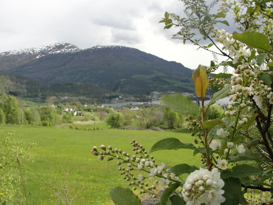 Hafslo in spring