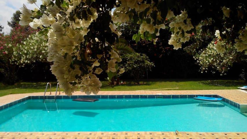Vue piscine depuis la terrasse principale  ou l'on peut manger à l'ombre d'un grand parasol !!