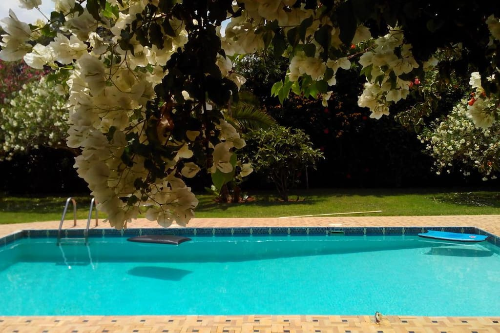 Vue piscine depuis la terrasse principale  ou l'on peut manger à l'ombre d'un grand parasol !