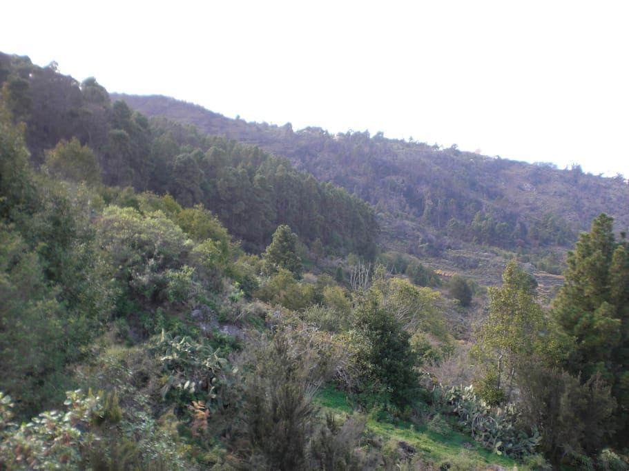 Casa rural el brezo finca los ciruelos houses for rent in icod de los vinos santa cruz de - Casa rural icod de los vinos ...