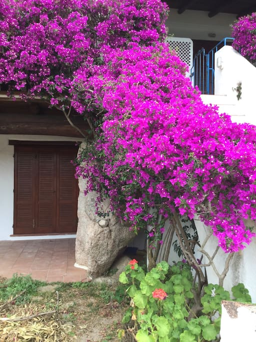 L'ingresso principale con la bellissima bouganville
