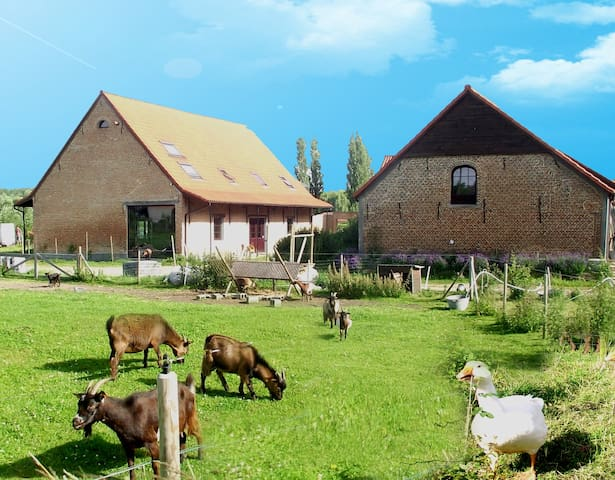 De Plukboerderij 2 to 19 pers - Schelle - Bed & Breakfast