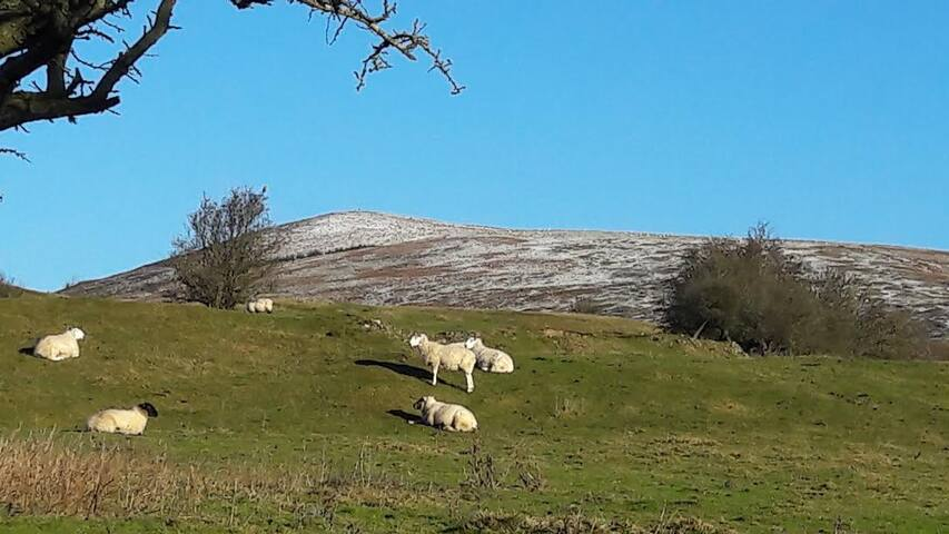 The first dusting of snow on Corndon Hill.