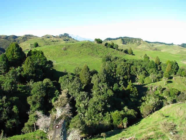 Bush Hill Farm with Mt Ruapehu in the distance