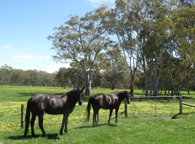 Bring your horses to stay and ride in beautiful countryside.