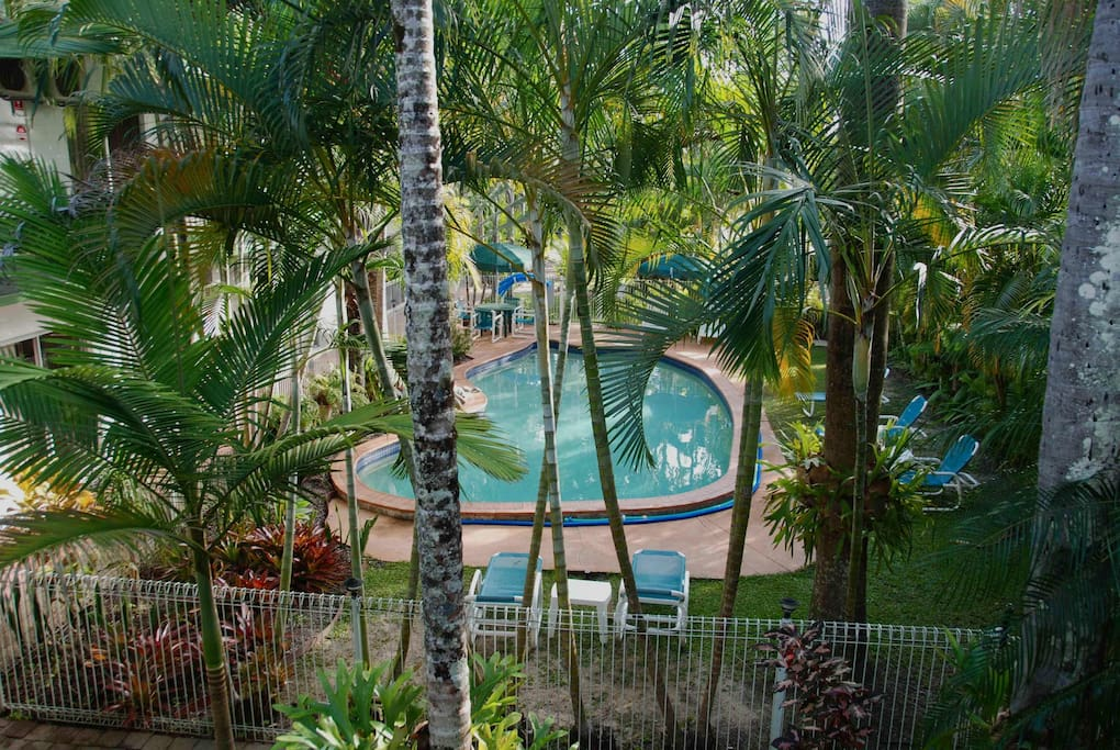 Lush tropical palm lined pool area