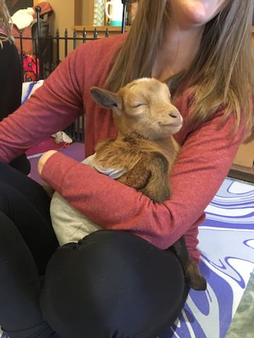 Help raise the rescued baby goats!