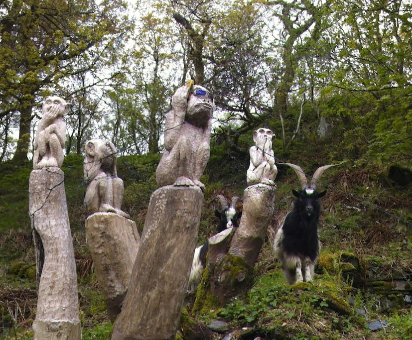 Start of sculpture trail (all there is so far)..4 Wise Monkeys and posing feral goats.